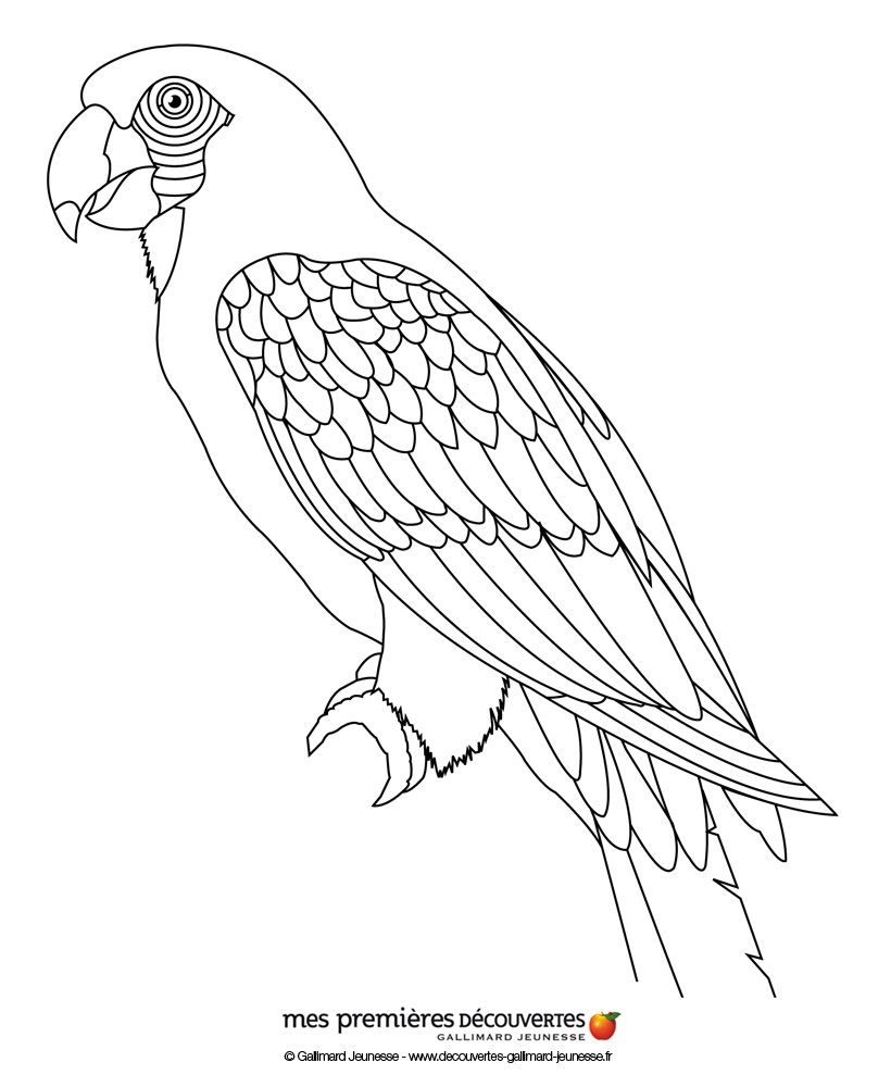 coloriage à dessiner masque perroquet
