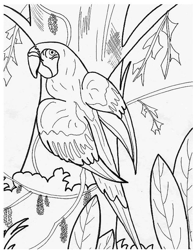 coloriage à dessiner perroquet en ligne