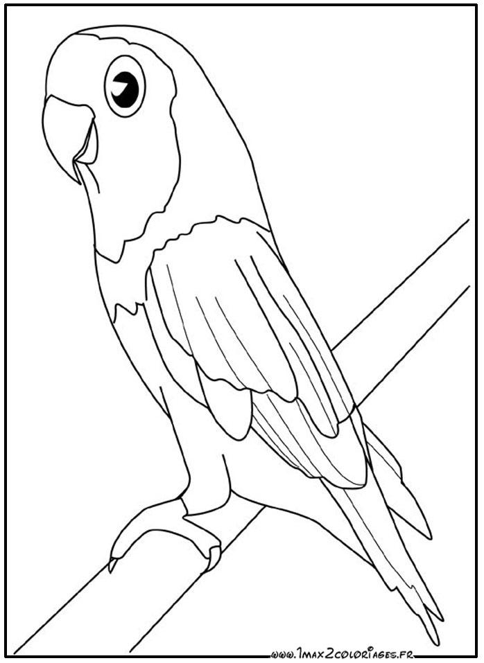 Dessin colorier perroquet mandala - Perroquet en dessin ...