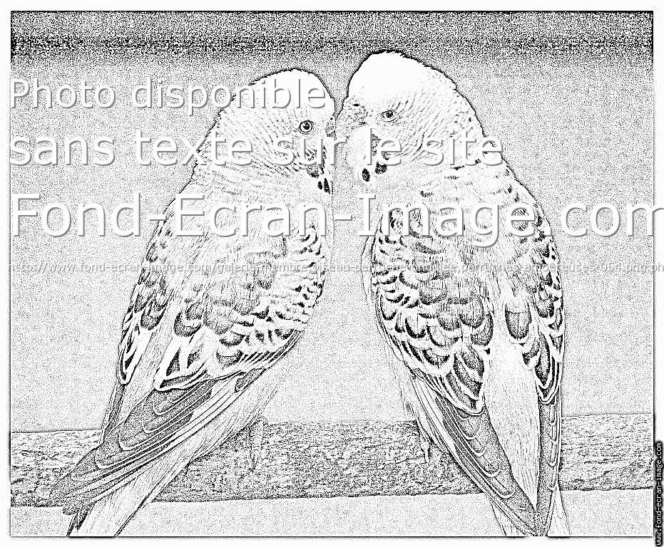 9 dessins de coloriage perruche a imprimer gratuit imprimer - Coloriage perruche ...