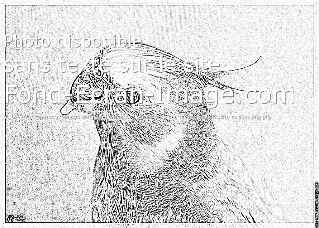 9 dessins de coloriage perruche a imprimer gratuit imprimer - Imprimer gratuit ...