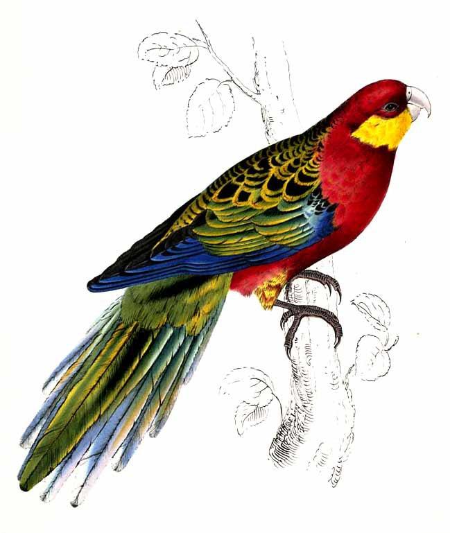 dessin � colorier a imprimer perruche