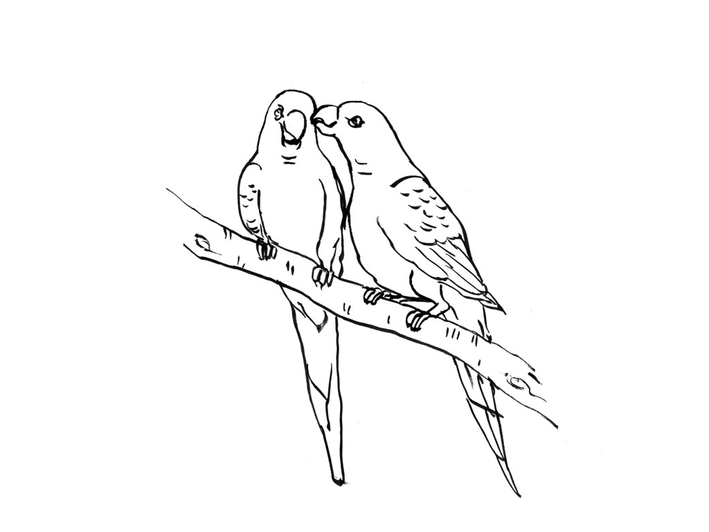 coloriage à dessiner perruche en ligne