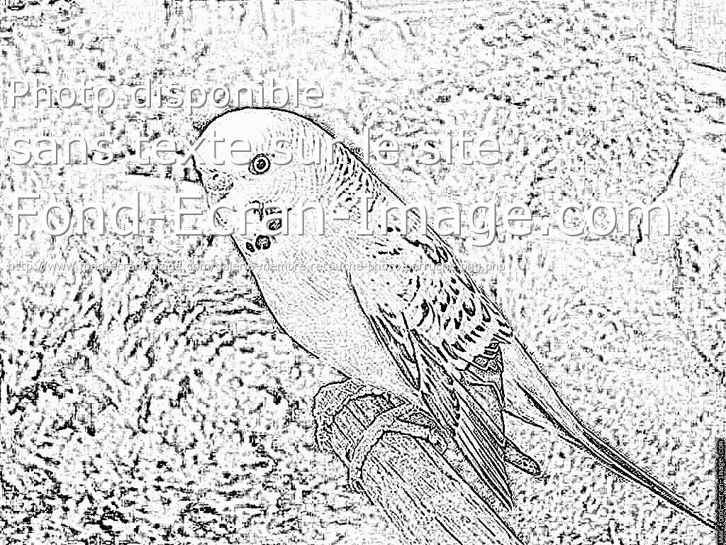 dessin � colorier perruche en ligne
