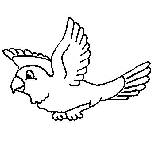 dessin de perruche ondul�e