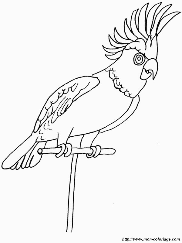 dessin perruche imprimer