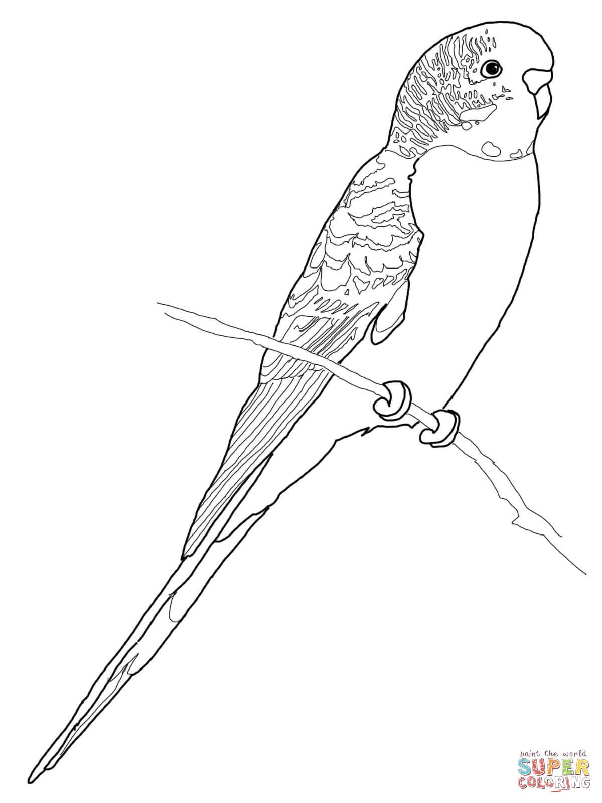 dessin perruche a imprimer gratuit