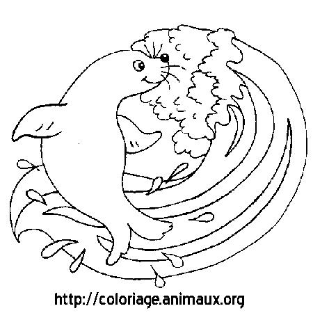 coloriage à dessiner phoque en ligne