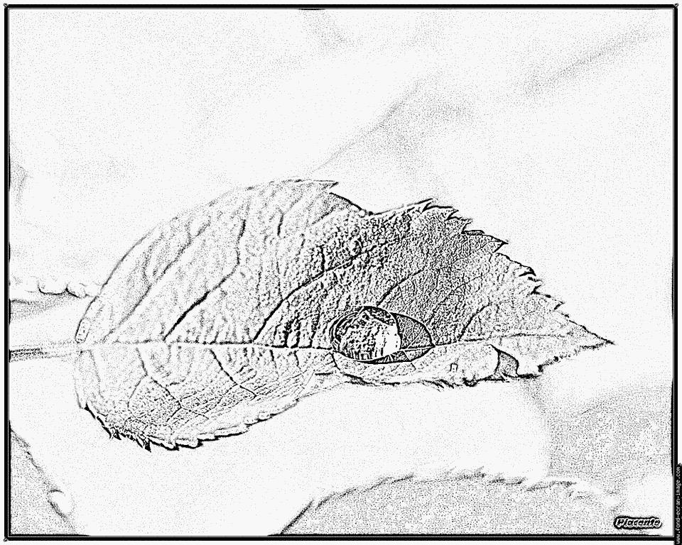 coloriage à dessiner phoque a imprimer