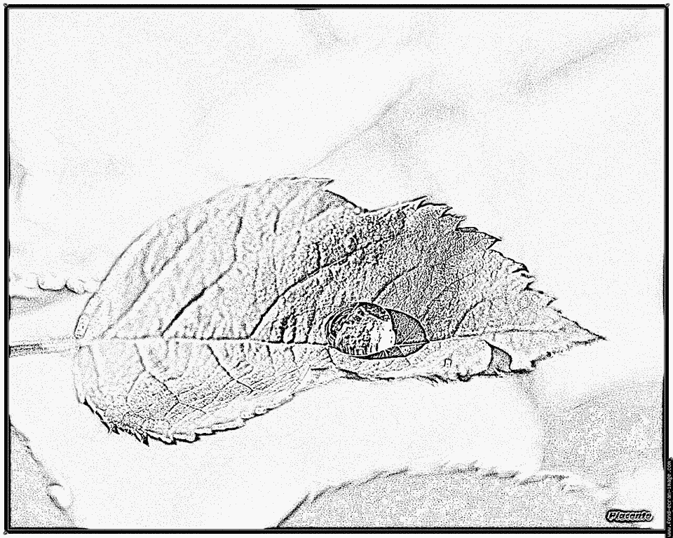 coloriage � dessiner phoque a imprimer