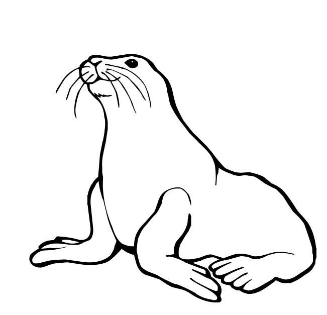 Dessin phoque banquise - Coloriage de phoque ...