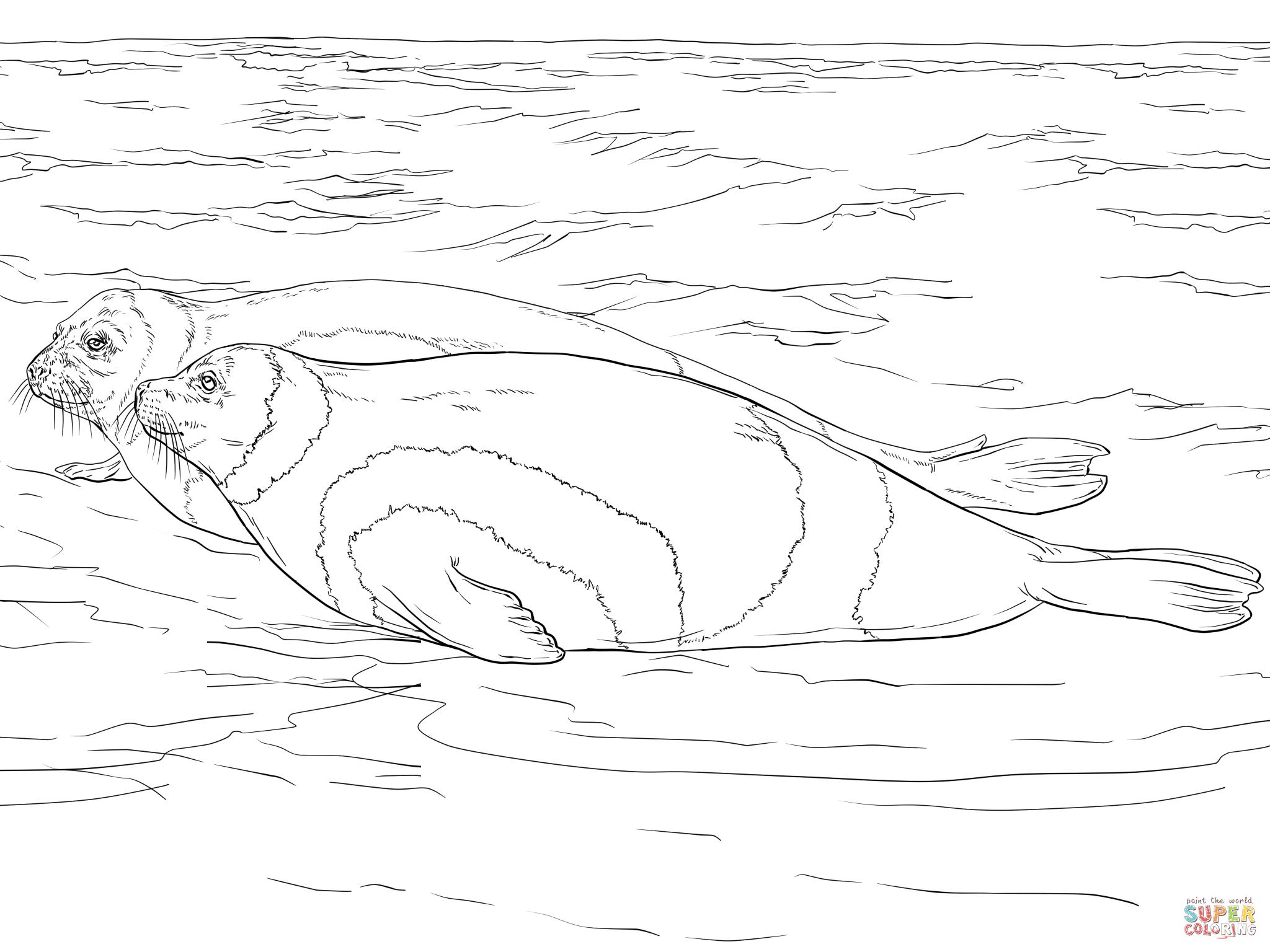 dessin à colorier de phoque en ligne