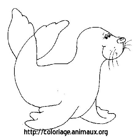 coloriage à dessiner de phoque en ligne