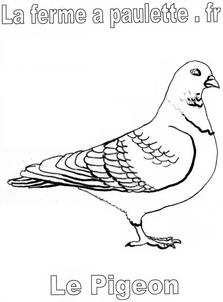 Dessin colorier pigeon voyageur - Voyageur dessin ...