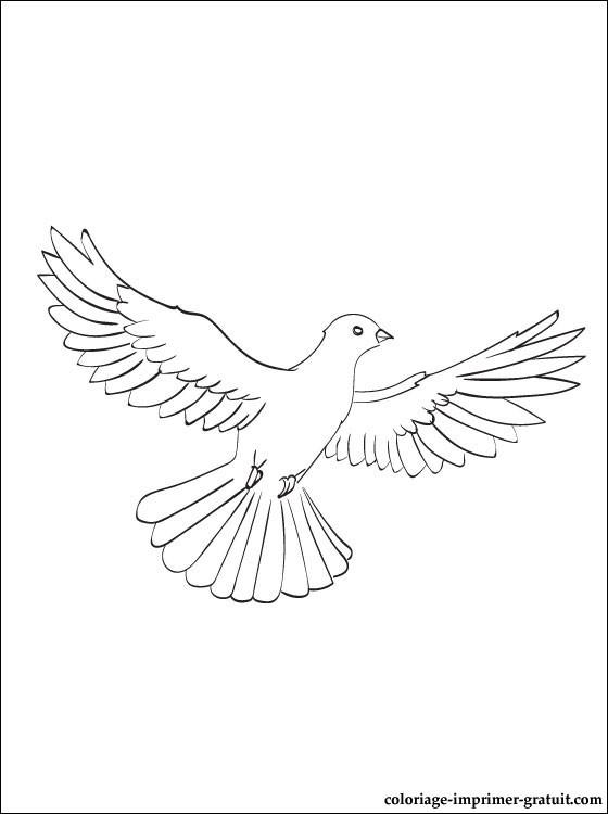 Coloriage Le Chien Et Le Pigeon.Dessin Pigeon Voyageur