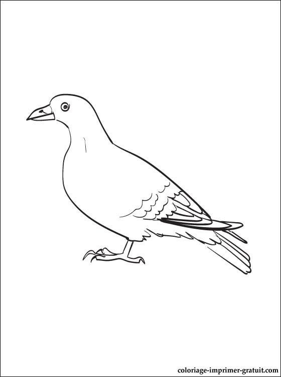 Dessin colorier pigeon ramier - Dessin pigeon ...