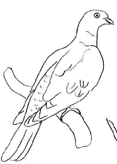Dessin pigeon voyageur - Voyageur dessin ...