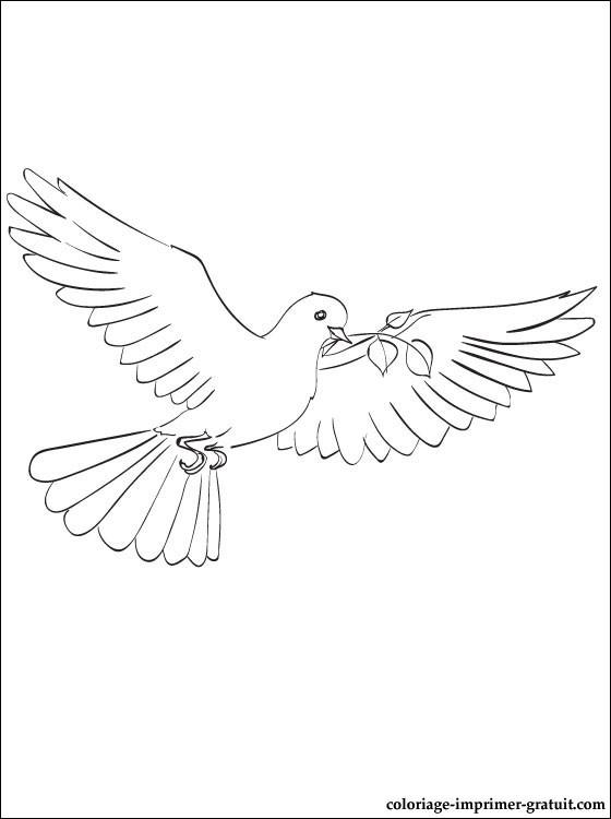 coloriage de pigeon gratuit