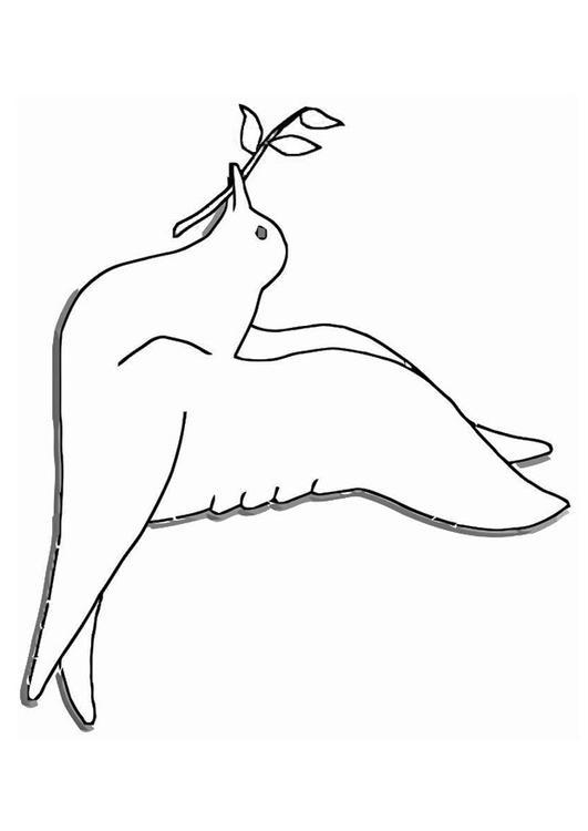dessin à colorier pigeon ramier