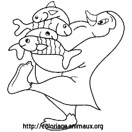 19 dessins de coloriage pingouin banquise imprimer - Dessin pinguoin ...