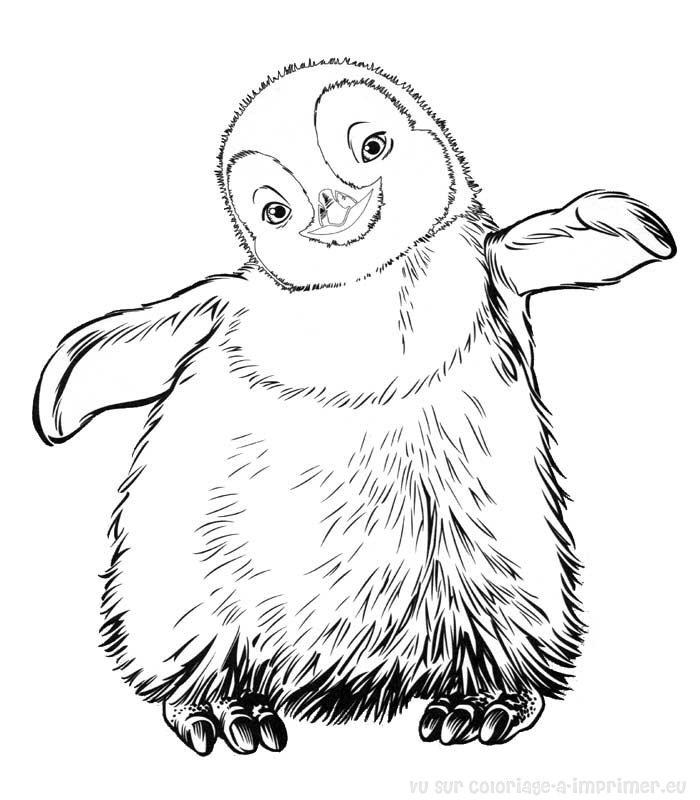 Dessin pingouin imprimer - Coloriage minable le pingouin ...