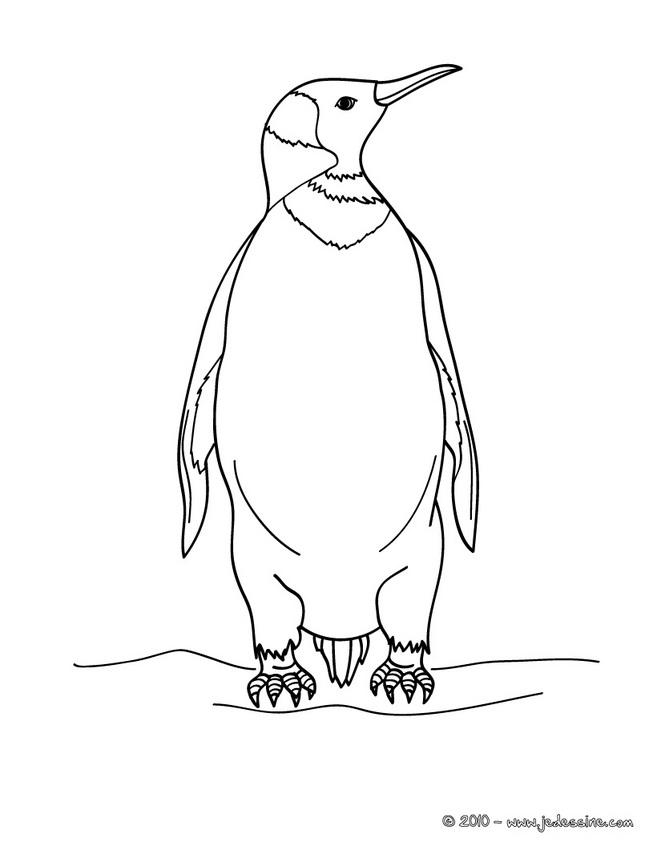 dessin imprimer pingouin