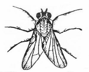 62 dessins de coloriage piqure de moustique imprimer - Dessin de mouche ...