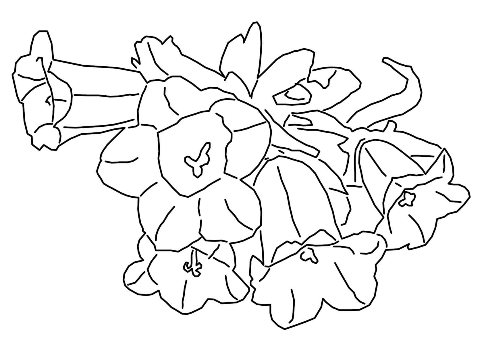 coloriage plante carnivore