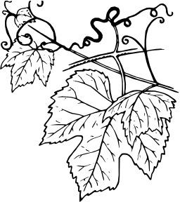 80 dessins de coloriage plante grimpante imprimer - Coloriage magique vierge ...