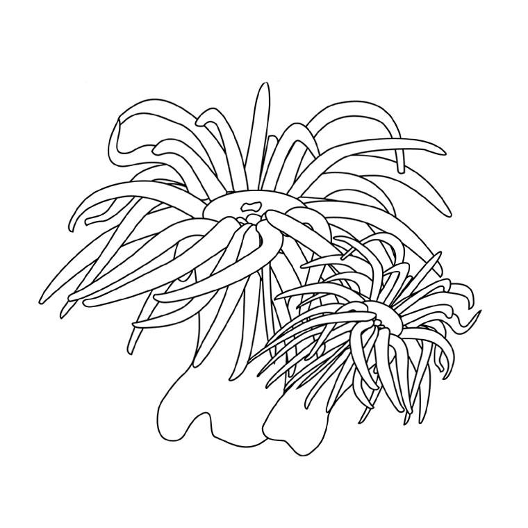 Bien connu 96 dessins de coloriage Plante Verte à imprimer RS48