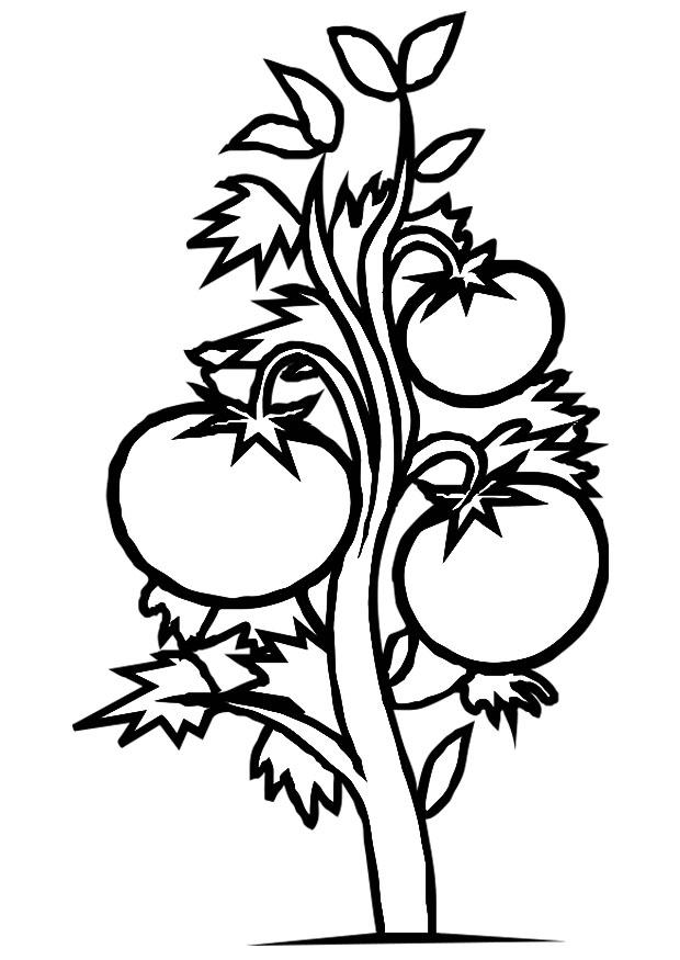 107 Dessins De Coloriage Plante à Imprimer