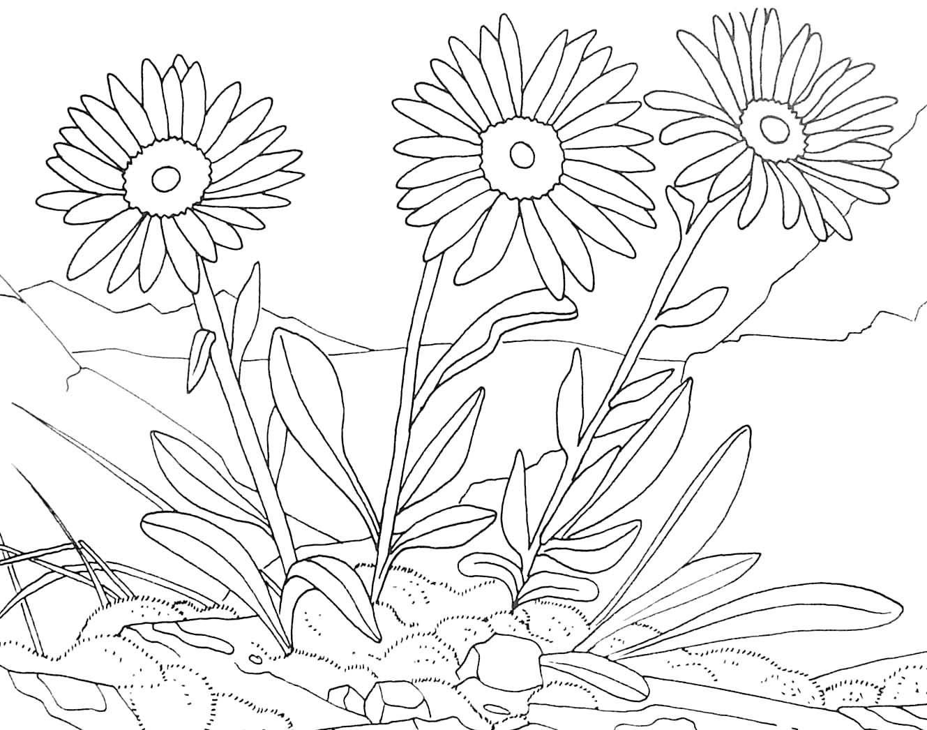 coloriage a dessiner d une plante
