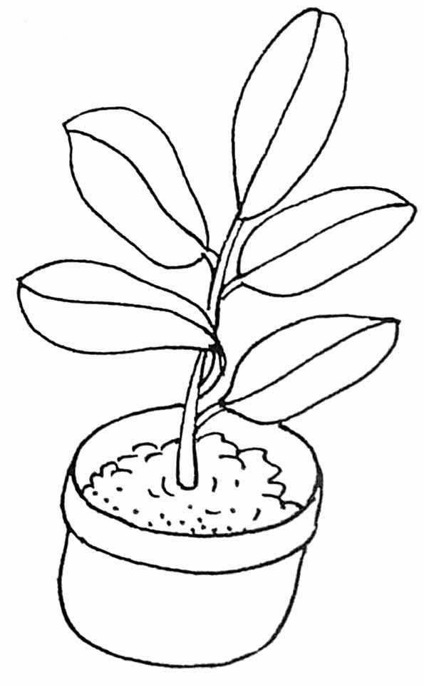 coloriage plante grimpante