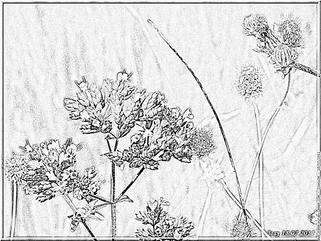 dessin plante carnivore