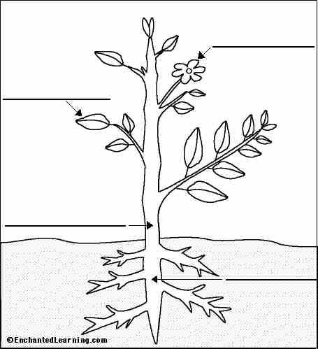 Coloriage à Dessiner Plante Grimpante