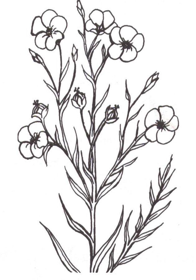 Coloriage plante - Coloriage fleurs et plantes a imprimer ...