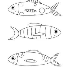 dessin poisson d'avril nounoudunord