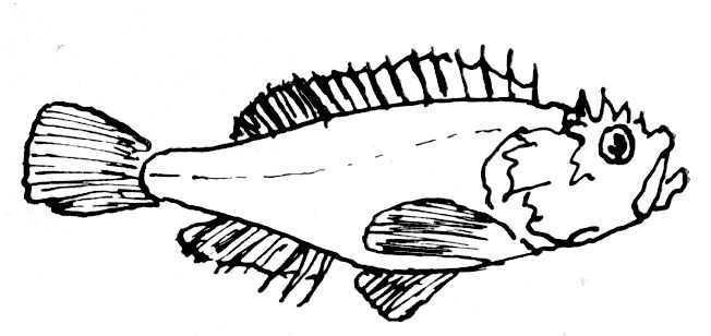 coloriage à dessiner poisson rouge