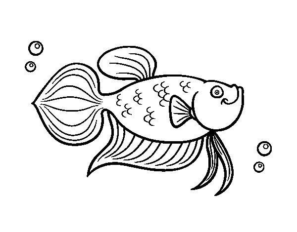 coloriage de poisson rouge a imprimer