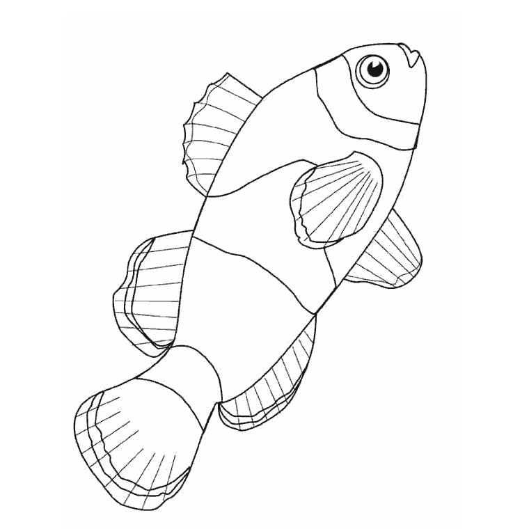 coloriage à dessiner les poissons rouges matisse