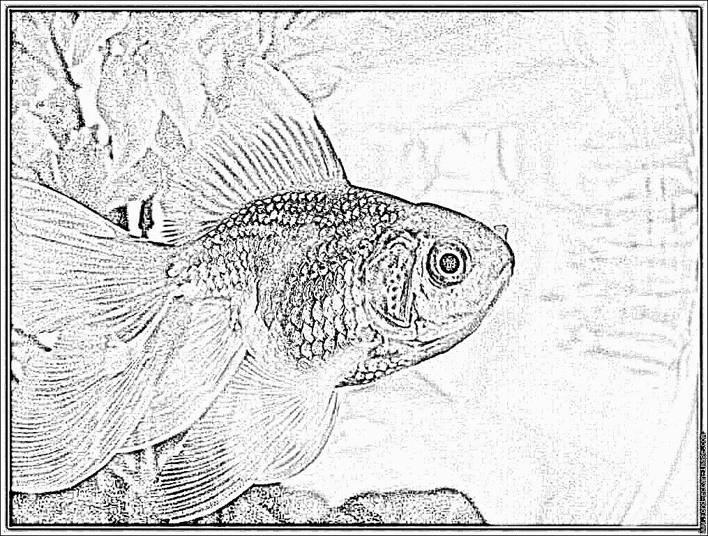 dessin à colorier poisson rouge gratuit