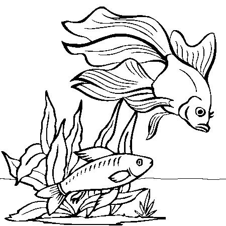 Dessin imprimer poisson rouge - Dessin poisson ...