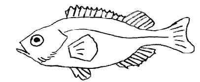 dessin à colorier imprimer poisson rouge