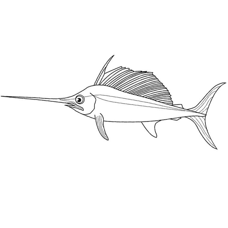 coloriage à dessiner poisson perroquet