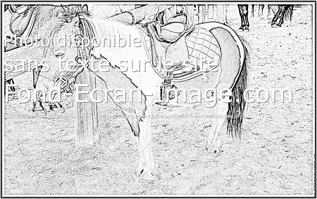 8 dessins de coloriage poney club imprimer - Coloriage poney club ...
