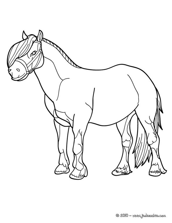 images à colorier poney
