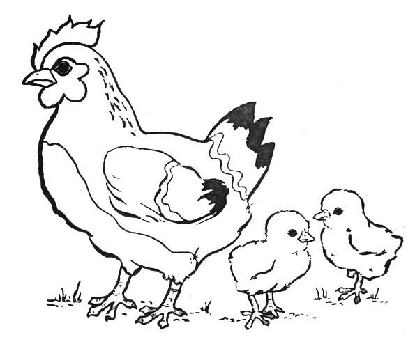 dessin d'une poule et ses poussins