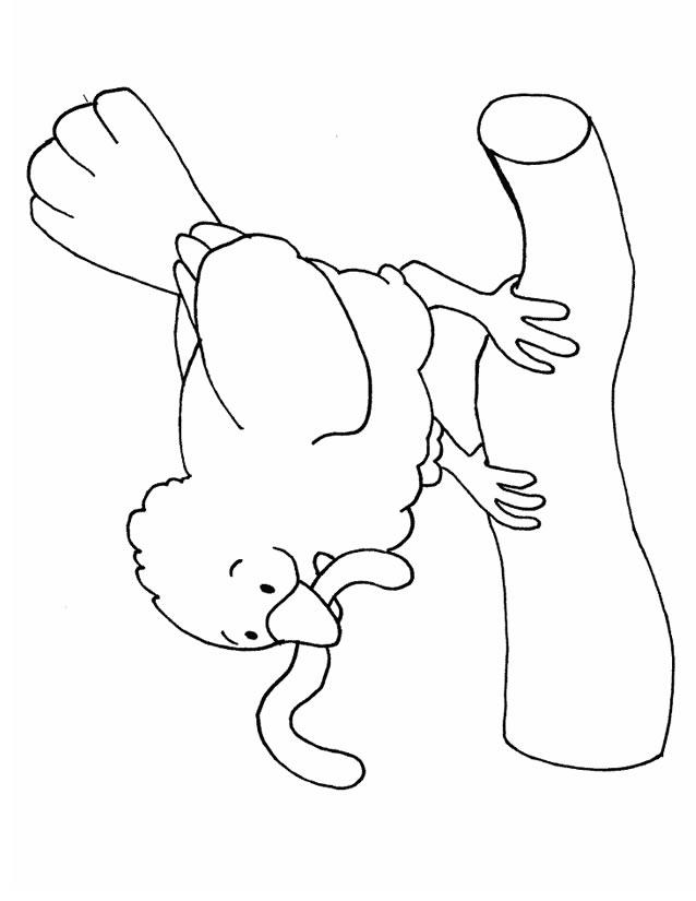 dessin poussin et poule