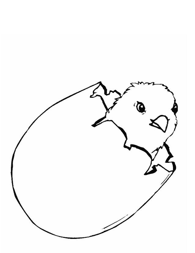 coloriage à dessiner poussin sortant de l'oeuf
