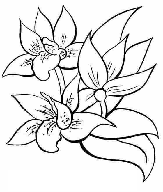 coloriage printemps fleurs